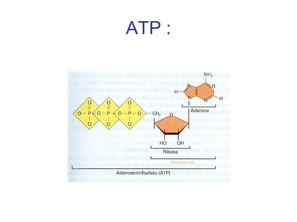 ATP :