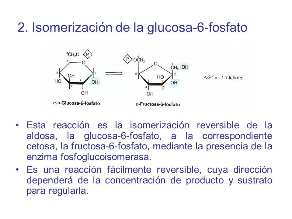 2. Isomerización de la glucosa-6-fosfato
