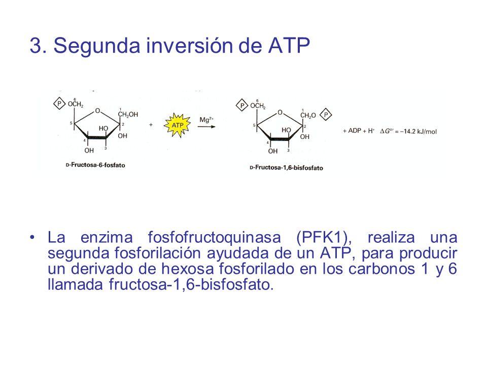 3. Segunda inversión de ATP