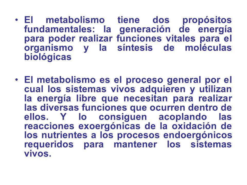 El metabolismo tiene dos propósitos fundamentales: la generación de energía para poder realizar funciones vitales para el organismo y la síntesis de moléculas biológicas