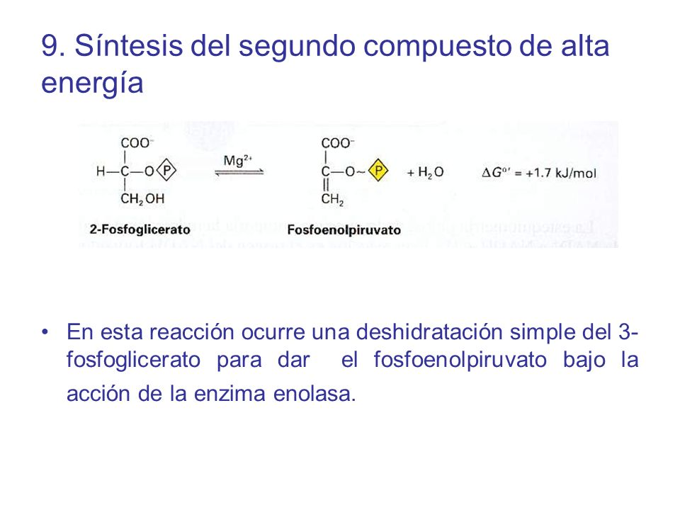9. Síntesis del segundo compuesto de alta energía