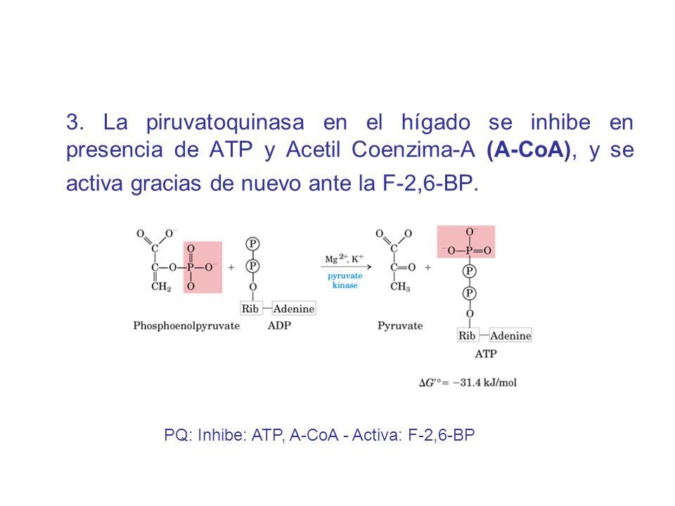 3. La piruvatoquinasa en el hígado se inhibe en presencia de ATP y Acetil Coenzima-A (A-CoA), y se activa gracias de nuevo ante la F-2,6-BP.