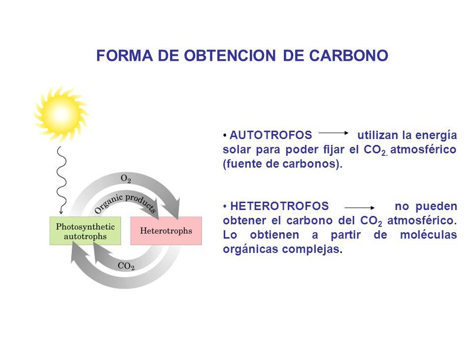 FORMA DE OBTENCION DE CARBONO
