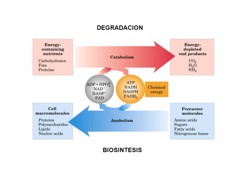 DEGRADACION BIOSINTESIS