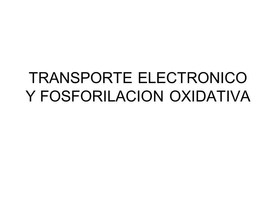 TRANSPORTE ELECTRONICO Y FOSFORILACION OXIDATIVA
