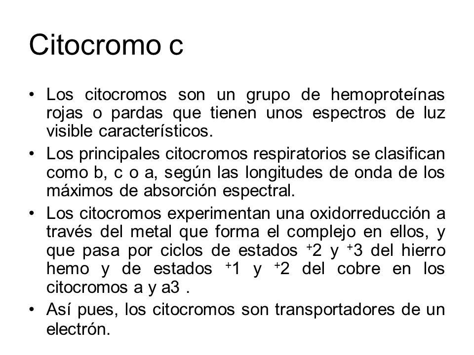 Citocromo c Los citocromos son un grupo de hemoproteínas rojas o pardas que tienen unos espectros de luz visible característicos.