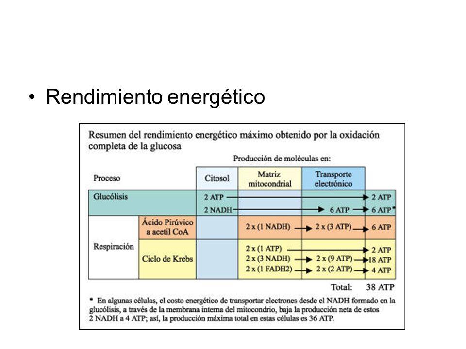 Rendimiento energético