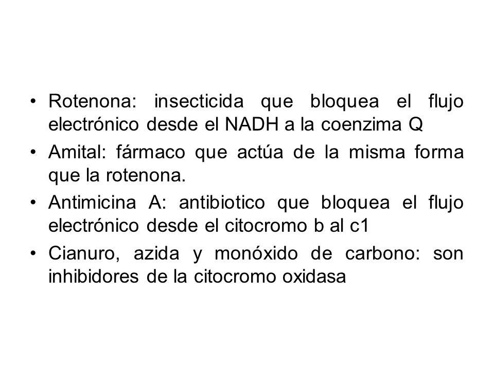 Rotenona: insecticida que bloquea el flujo electrónico desde el NADH a la coenzima Q