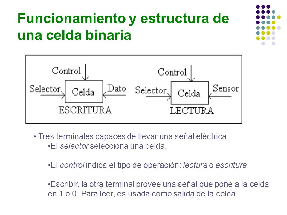 Funcionamiento y estructura de una celda binaria