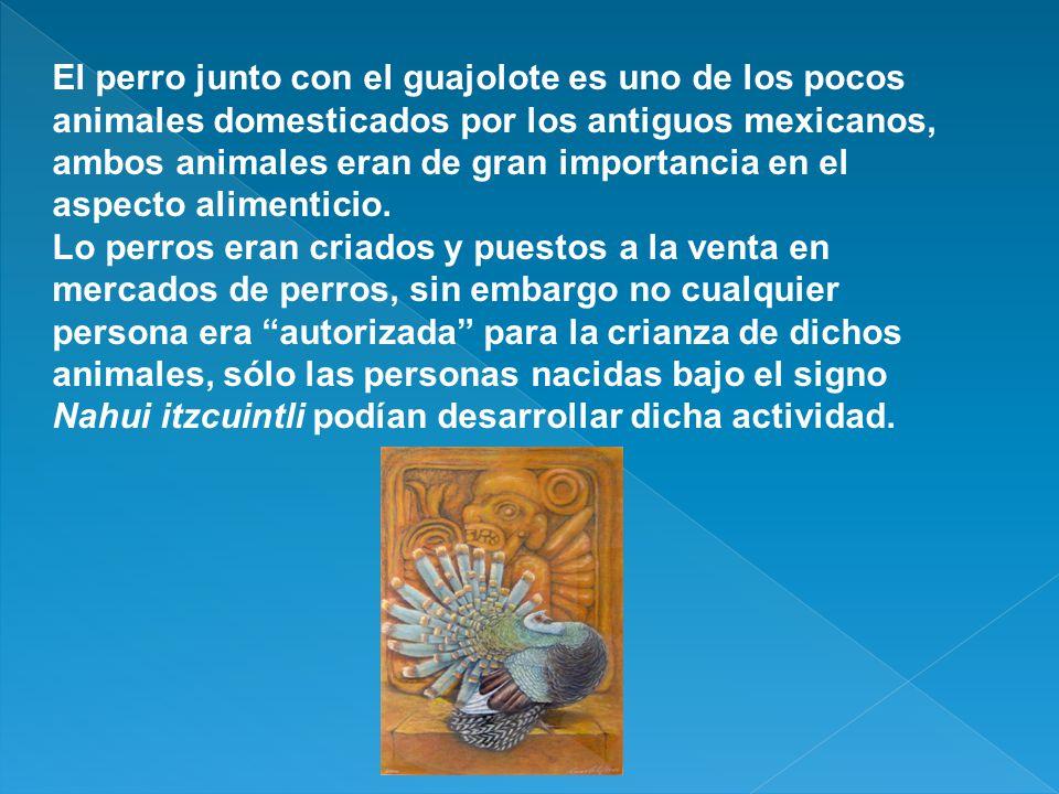 El perro junto con el guajolote es uno de los pocos animales domesticados por los antiguos mexicanos, ambos animales eran de gran importancia en el aspecto alimenticio.