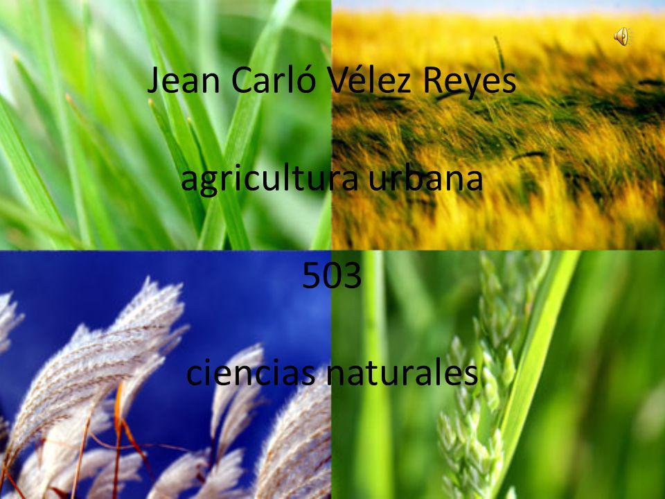 Jean Carló Vélez Reyes agricultura urbana 503 ciencias naturales