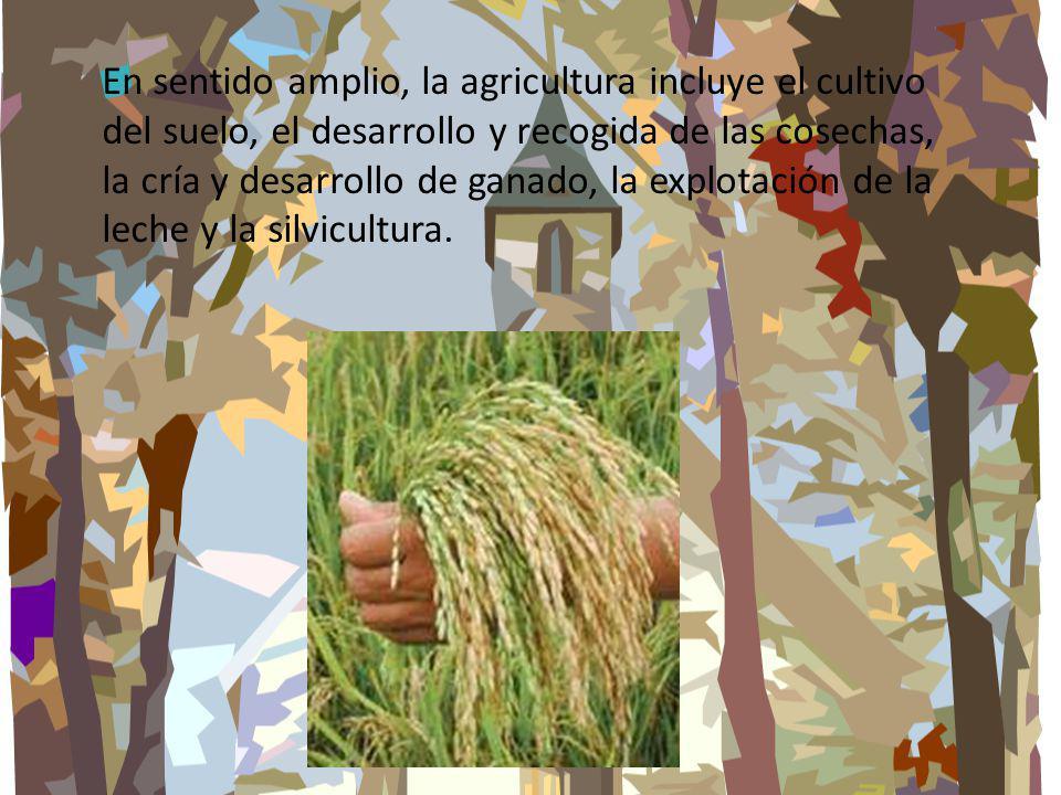 En sentido amplio, la agricultura incluye el cultivo del suelo, el desarrollo y recogida de las cosechas, la cría y desarrollo de ganado, la explotación de la leche y la silvicultura.