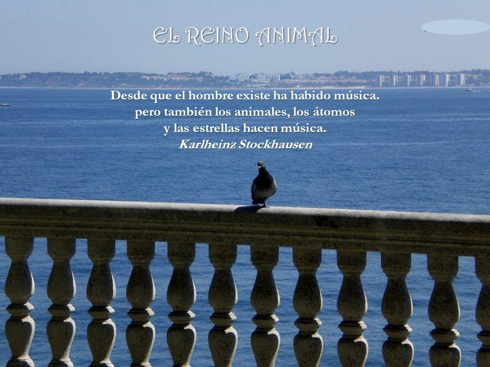 Álbum de fotografías EL REINO ANIMAL por larisa