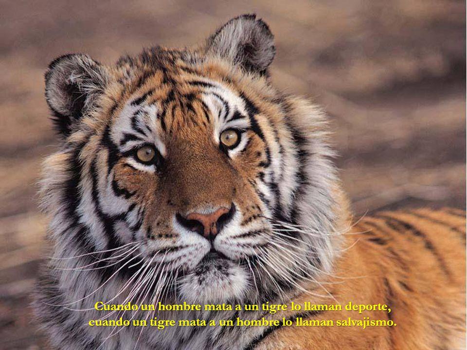 Cuando un hombre mata a un tigre lo llaman deporte,