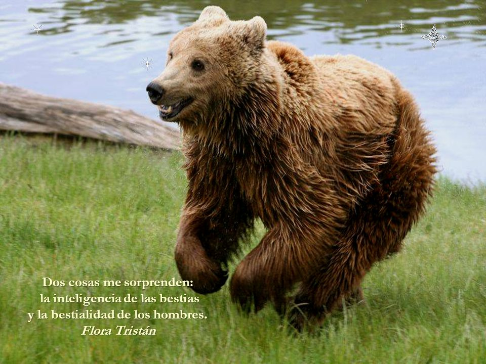 Dos cosas me sorprenden: la inteligencia de las bestias