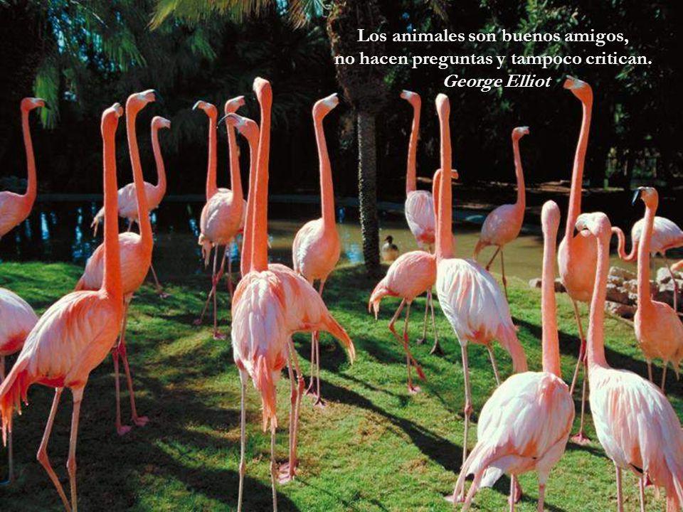 Los animales son buenos amigos, no hacen preguntas y tampoco critican.