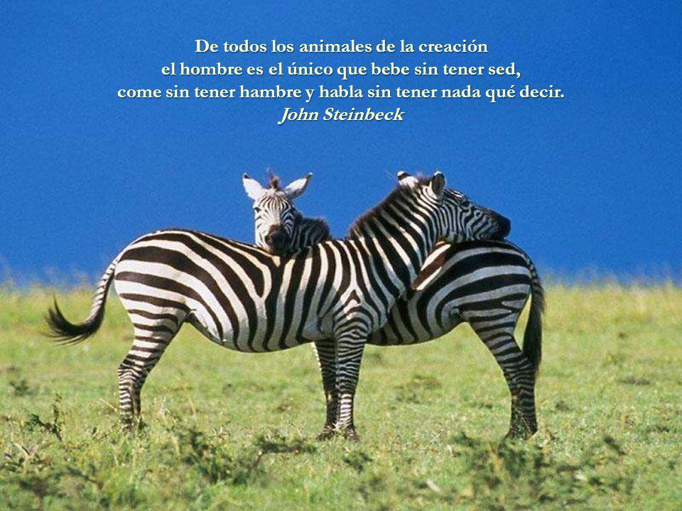 De todos los animales de la creación