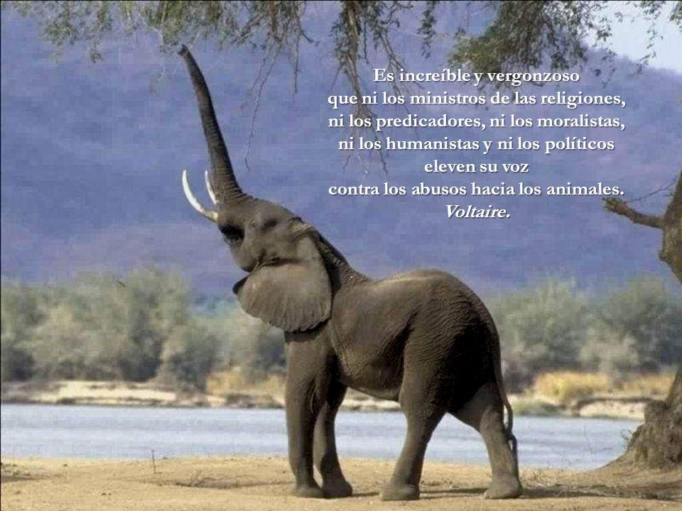 Es increíble y vergonzoso contra los abusos hacia los animales.