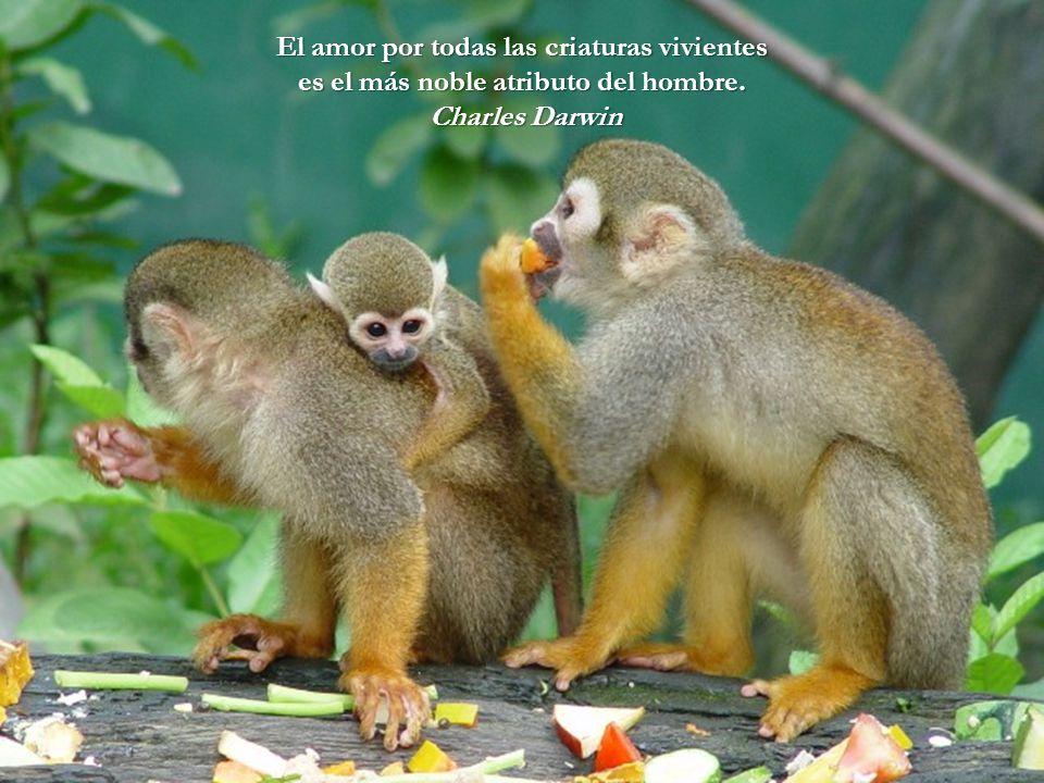 El amor por todas las criaturas vivientes