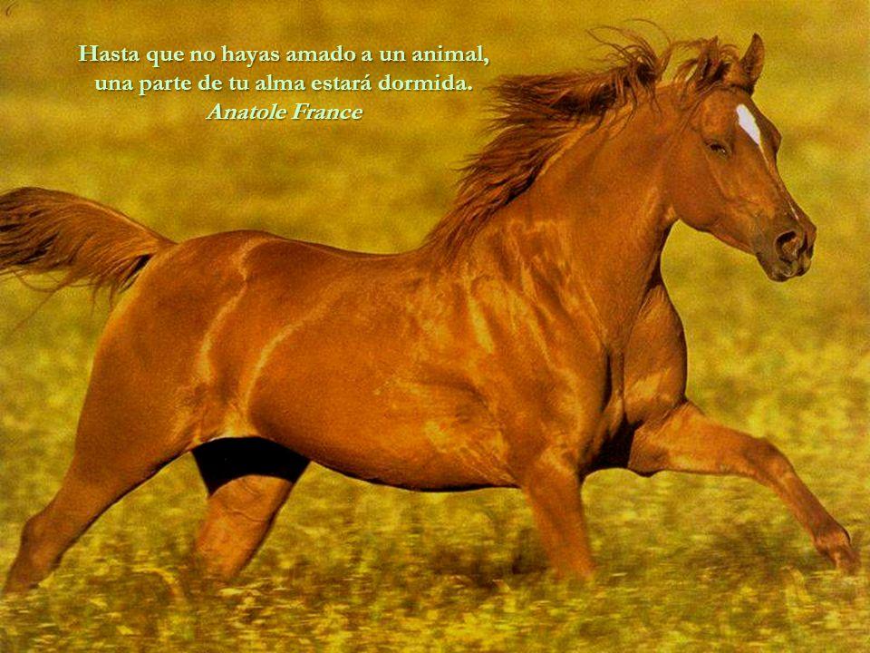 Hasta que no hayas amado a un animal, una parte de tu alma estará dormida.