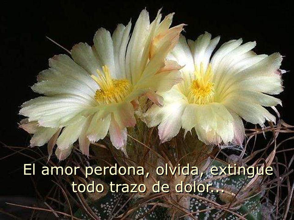 El amor perdona, olvida, extingue todo trazo de dolor...
