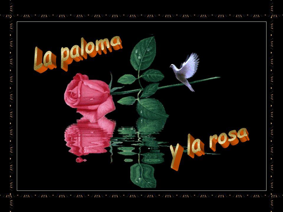 La paloma y la rosa