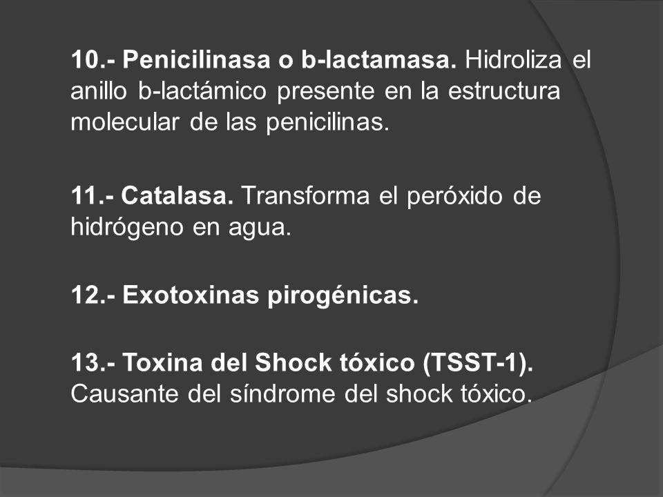10. - Penicilinasa o b-lactamasa