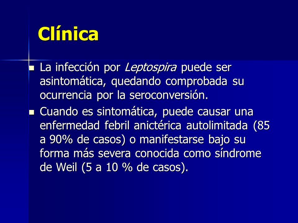 ClínicaLa infección por Leptospira puede ser asintomática, quedando comprobada su ocurrencia por la seroconversión.
