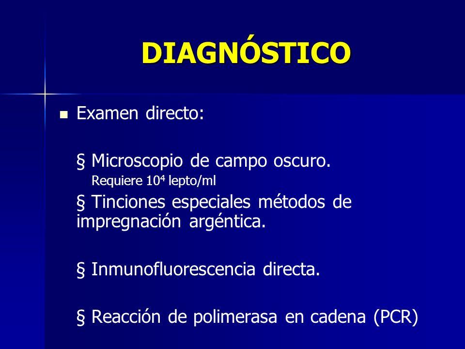 DIAGNÓSTICO Examen directo: § Microscopio de campo oscuro.