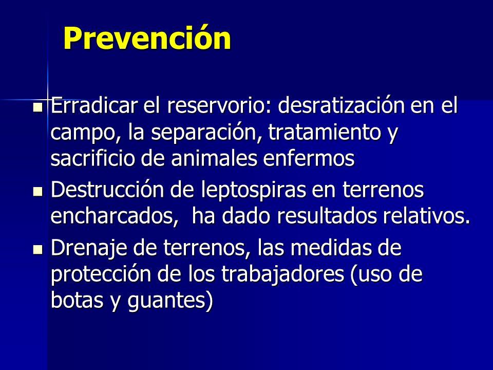 PrevenciónErradicar el reservorio: desratización en el campo, la separación, tratamiento y sacrificio de animales enfermos.