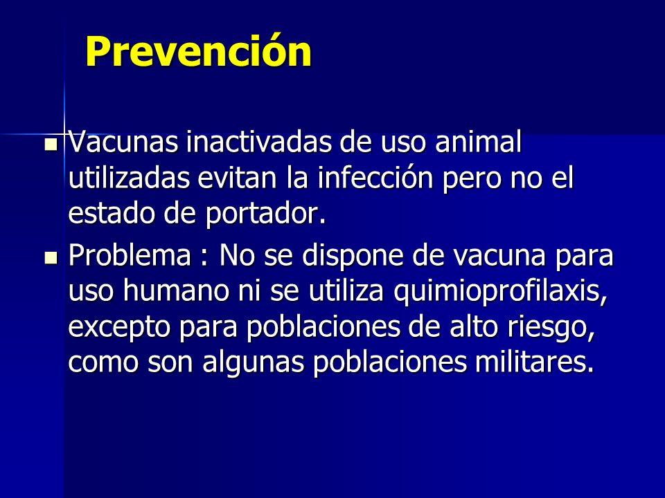 PrevenciónVacunas inactivadas de uso animal utilizadas evitan la infección pero no el estado de portador.