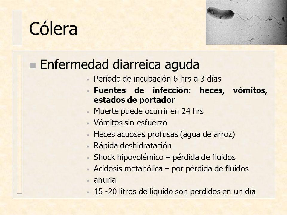 Cólera Enfermedad diarreica aguda Período de incubación 6 hrs a 3 días
