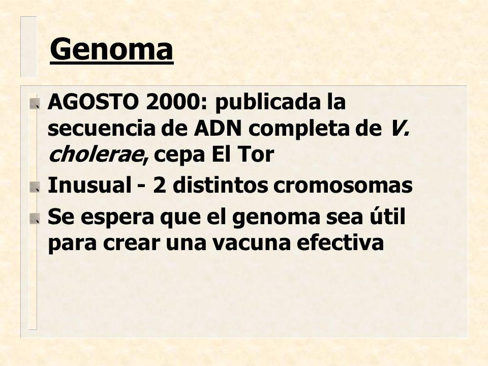 Genoma AGOSTO 2000: publicada la secuencia de ADN completa de V. cholerae, cepa El Tor. Inusual - 2 distintos cromosomas.