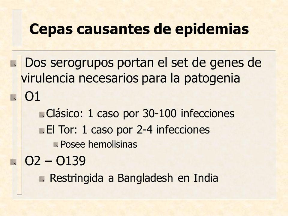 Cepas causantes de epidemias