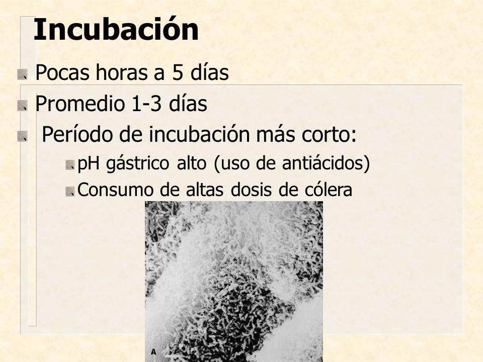 Incubación Pocas horas a 5 días Promedio 1-3 días