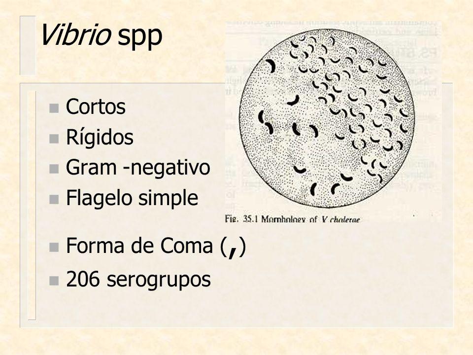 Vibrio spp Cortos Rígidos Gram -negativo Flagelo simple