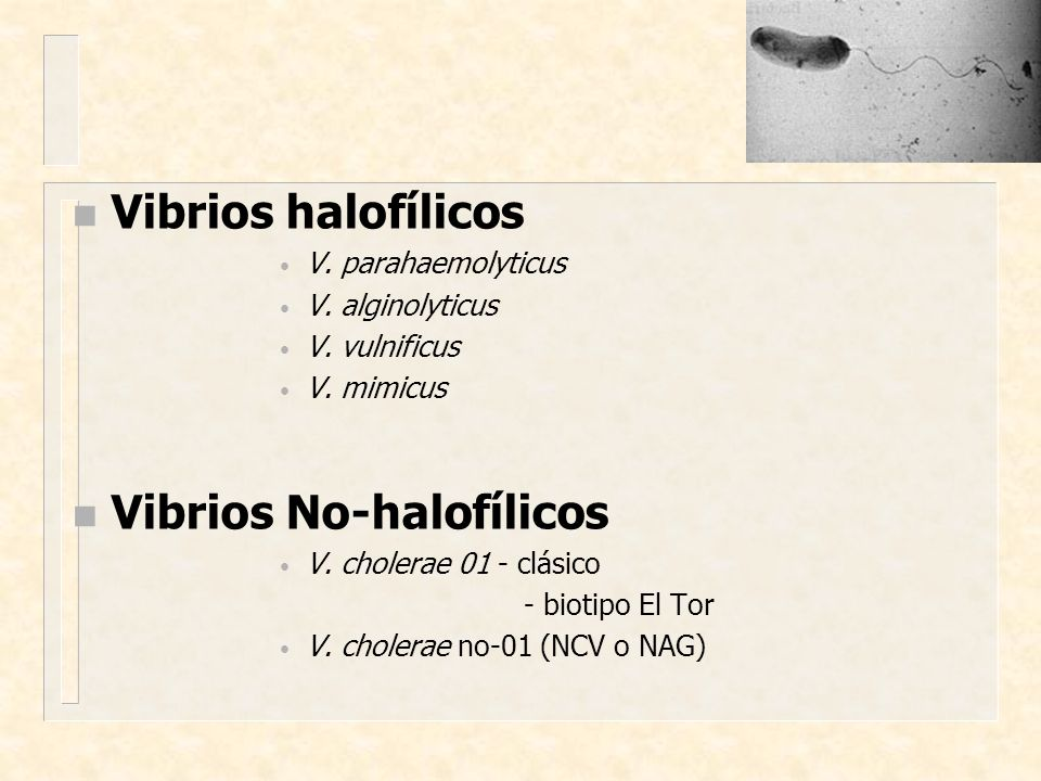 Vibrios No-halofílicos
