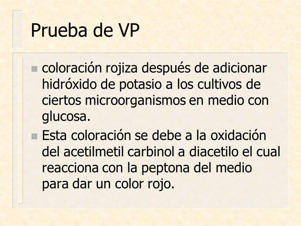 Prueba de VP coloración rojiza después de adicionar hidróxido de potasio a los cultivos de ciertos microorganismos en medio con glucosa.