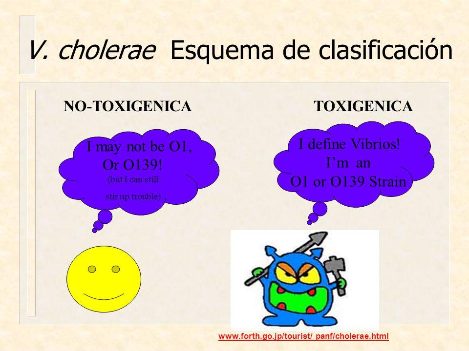V. cholerae Esquema de clasificación