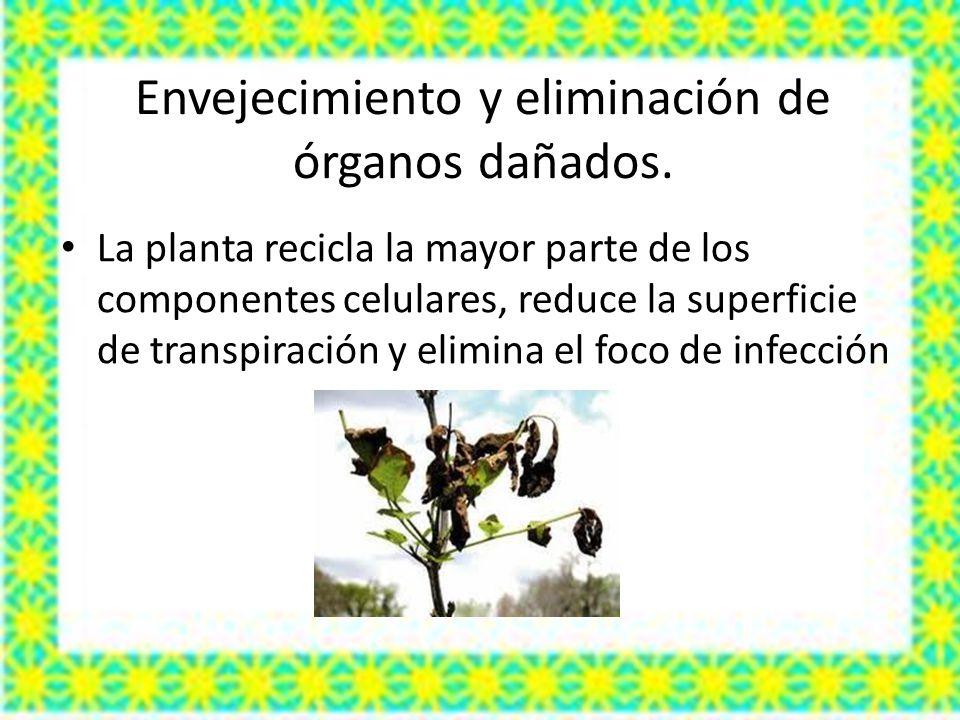 Envejecimiento y eliminación de órganos dañados.