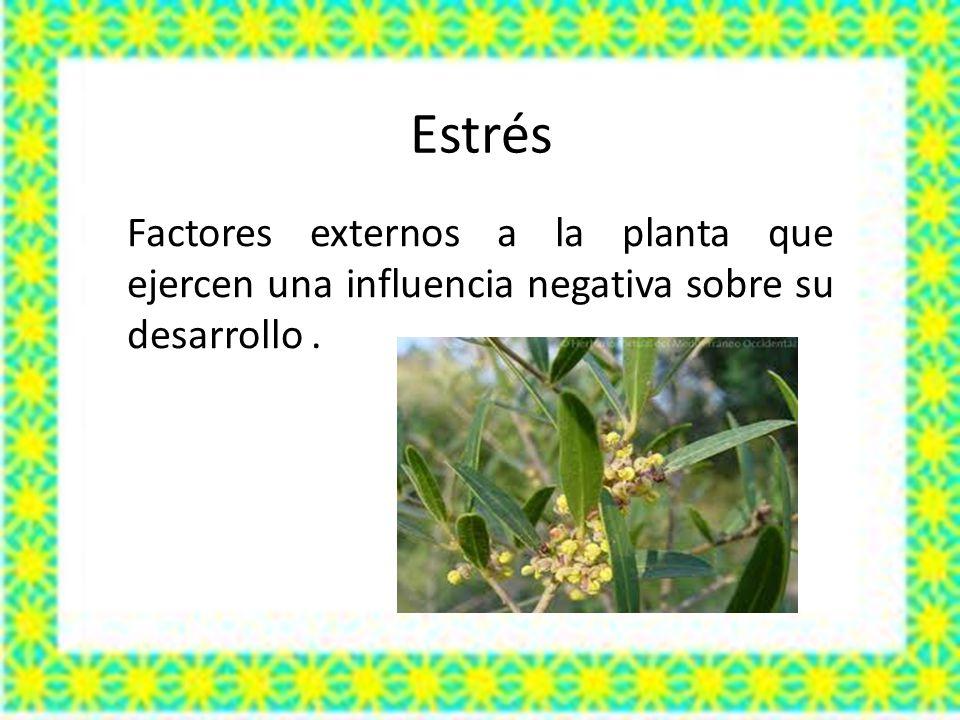 Estrés Factores externos a la planta que ejercen una influencia negativa sobre su desarrollo .