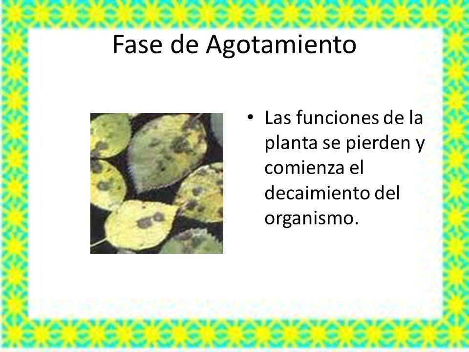 Fase de Agotamiento Las funciones de la planta se pierden y comienza el decaimiento del organismo.