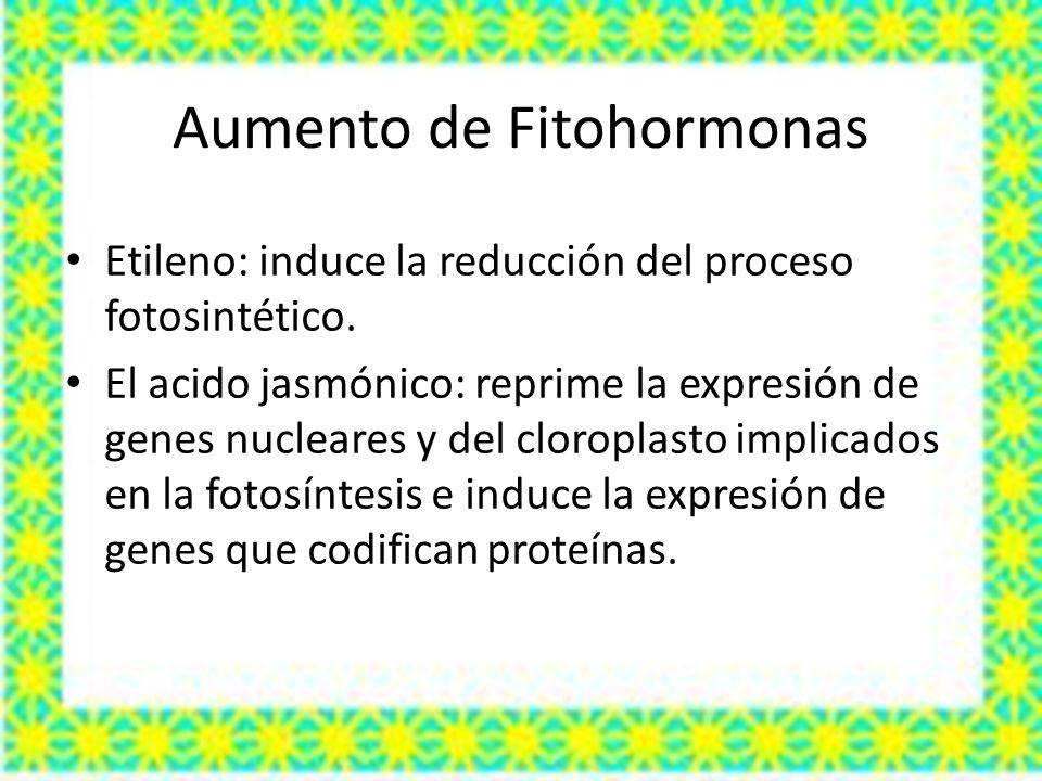Aumento de Fitohormonas