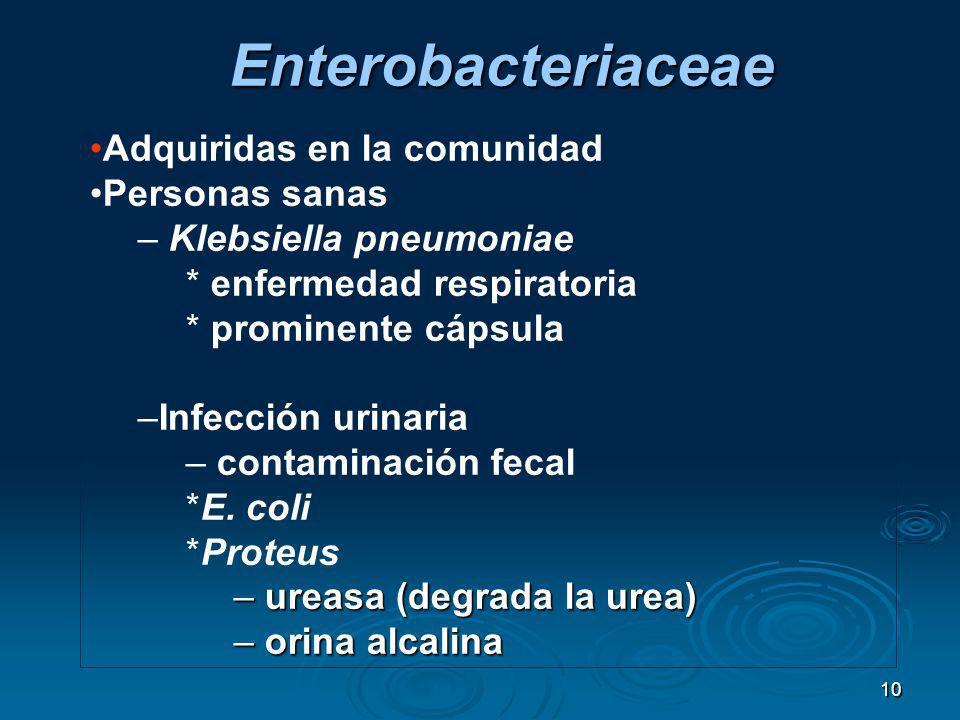 Enterobacteriaceae Adquiridas en la comunidad Personas sanas