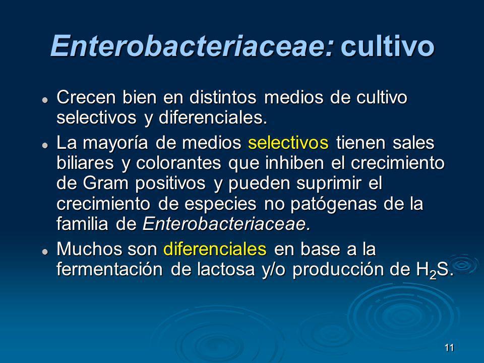Enterobacteriaceae: cultivo
