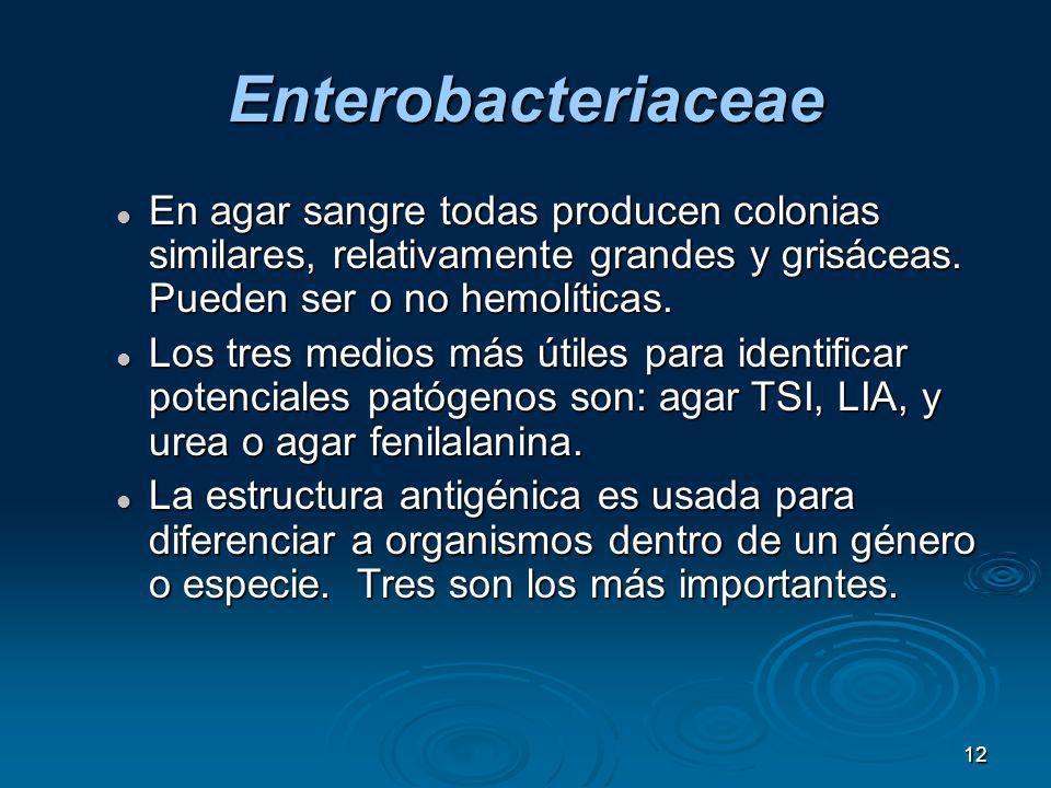 Enterobacteriaceae En agar sangre todas producen colonias similares, relativamente grandes y grisáceas. Pueden ser o no hemolíticas.