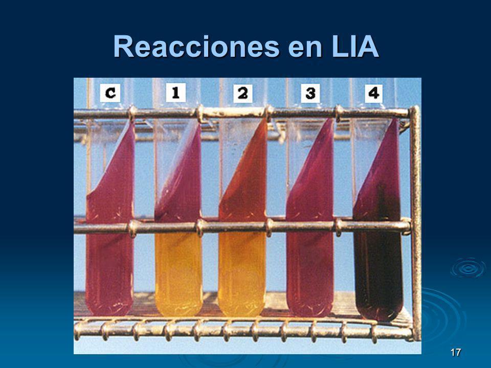 Reacciones en LIA 17