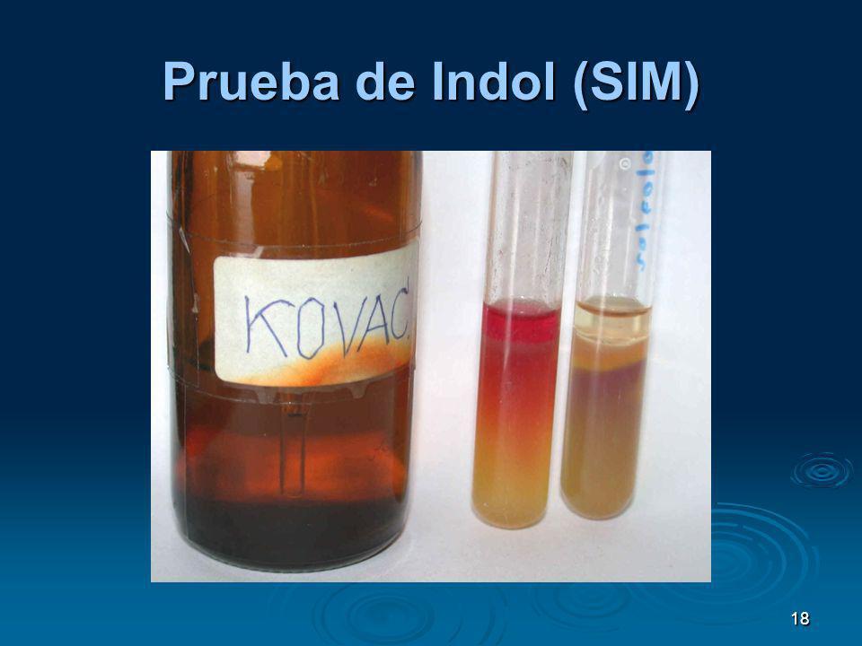 Prueba de Indol (SIM) 18
