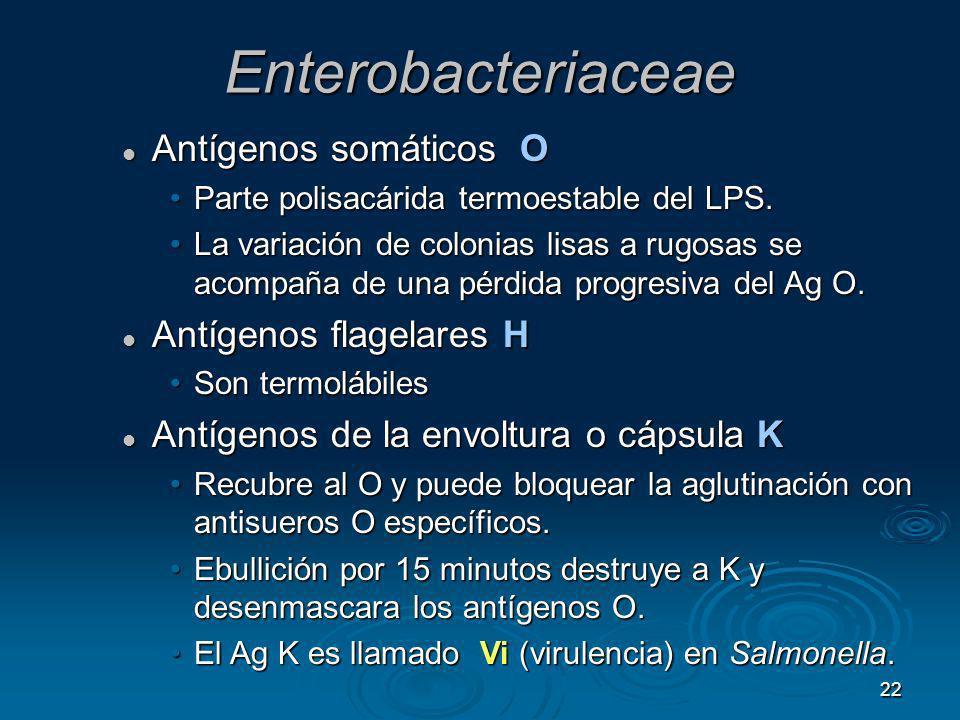 Enterobacteriaceae Antígenos somáticos O Antígenos flagelares H