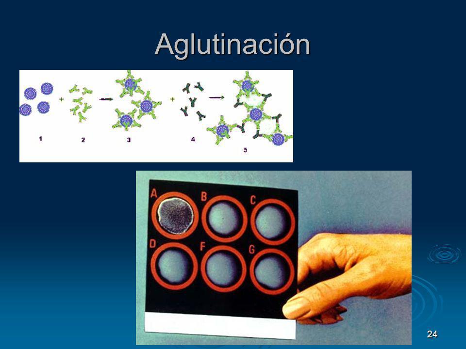 Aglutinación 24